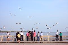 Οι τουρίστες απολαμβάνουν και τα πουλιά στην παραλία PU κτυπήματος Στοκ Εικόνα