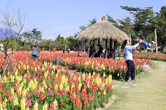 Οι τουρίστες απολαμβάνουν τα λουλούδια στο yuanboyuan πάρκο κατά τη διάρκεια του φεστιβάλ άνοιξη Στοκ φωτογραφίες με δικαίωμα ελεύθερης χρήσης