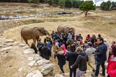 Οι τουρίστες επισκέπτονται το σαφάρι ζωολογικών κήπων πόλεων Στοκ εικόνες με δικαίωμα ελεύθερης χρήσης