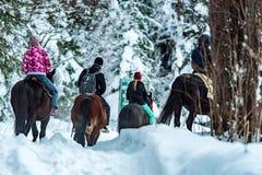 Οι τουρίστες οδηγούν τα άλογα κατά τη χειμερινή δασική πίσω άποψη Στοκ Εικόνες