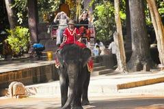 Οι τουρίστες οδηγούν έναν ελέφαντα Στοκ εικόνες με δικαίωμα ελεύθερης χρήσης