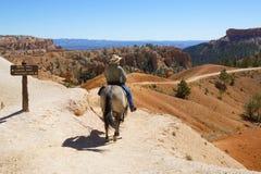 Οι τουρίστες οδηγούν τα άλογα στη δοκιμή αλόγων στο εθνικό πάρκο φαραγγιών του Bryce στη Γιούτα Στοκ Φωτογραφία