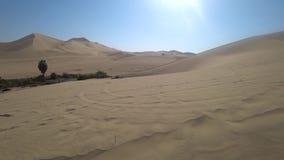 Οι τουρίστες στον αμμόλοφο άμμου με λάθη πέρα από τους αμμόλοφους σε Huacachina εγκαταλείπουν, Περού φιλμ μικρού μήκους