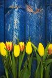 Οι τουλίπες ανασκόπησης αναπηδούν το ξύλινο μπλε λουλουδιών Στοκ Εικόνες