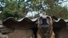 Οι του χωριού μιγάς δορές στο θάλαμό του Άστεγο σκυλί, προστασία δικαιωμάτων των ζώων, καταφύγιο για τα άστεγα ζώα απόθεμα βίντεο