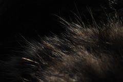 Οι τρίχες μιας όμορφης γάτας Στοκ εικόνες με δικαίωμα ελεύθερης χρήσης