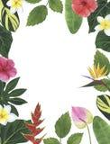 Οι τροπικοί κύκλοι ανθίζουν hibiscus τη βοτανική διακόσμηση σχεδίου πρόσκλησης καρτών διακοσμήσεων διακοσμήσεων απεικονίσεων Wate στοκ φωτογραφία με δικαίωμα ελεύθερης χρήσης
