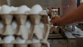 Οι υπάλληλοι συσκευάζουν τα ακατέργαστα αυγά κοτών στους δίσκους χαρτοκιβωτίων στο ταξινομώντας εργοστάσιο κοτόπουλου απόθεμα βίντεο
