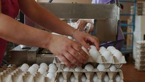 Οι υπάλληλοι συσκευάζουν τα φρέσκα αυγά κοτών στο ταξινομώντας εργοστάσιο κοτόπουλου απόθεμα βίντεο