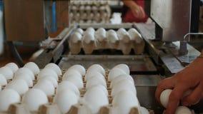 Οι υπάλληλοι του αυγού ` s καλλιεργούν τα αυγά κοτών πακέτων με το χέρι στους δίσκους χαρτονιού απόθεμα βίντεο