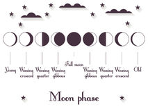 Οι φάσεις του φεγγαριού Ολόκληρος ο κύκλος από το νέο φεγγάρι στο σύνολο διάνυσμα διανυσματική απεικόνιση