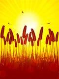 οι φλόγες φθινοπώρου σ&upsilon Στοκ φωτογραφία με δικαίωμα ελεύθερης χρήσης