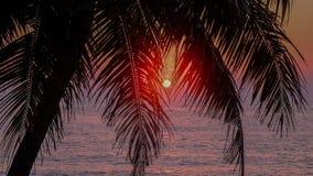 Οι φοίνικες σκιαγραφούν τη θερμή όμορφη κόκκινη ζωγραφική ηλιοβασιλεμάτων Στοκ φωτογραφία με δικαίωμα ελεύθερης χρήσης