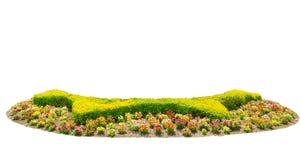 Οι φράκτες σχεδίου κόβουν το πράσινο δέντρο με το ζωηρόχρωμο κρεβάτι λουλουδιών που απομονώνεται στο άσπρο υπόβαθρο Στοκ Εικόνα