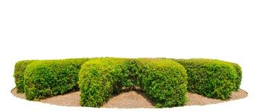 Οι φράκτες σχεδίου κόβουν το πράσινο δέντρο που απομονώνεται στο άσπρο υπόβαθρο Στοκ φωτογραφία με δικαίωμα ελεύθερης χρήσης