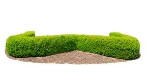 Οι φράκτες σχεδίου κόβουν το πράσινο δέντρο που απομονώνεται στο άσπρο υπόβαθρο Στοκ Φωτογραφίες