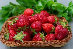 Οι φράουλες είναι φρέσκες, juicy, νόστιμος σε έναν φυσικό στοκ φωτογραφία με δικαίωμα ελεύθερης χρήσης