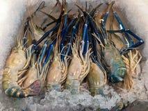 Οι φρέσκες γαρίδες στον πάγο στην αγορά για πωλούν Στοκ φωτογραφία με δικαίωμα ελεύθερης χρήσης