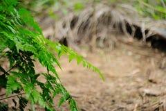 Οι φτέρες Beautyful αφήνουν στο πράσινο φύλλωμα το φυσικό floral υπόβαθρο φτερών στον ήλιο στοκ φωτογραφία με δικαίωμα ελεύθερης χρήσης