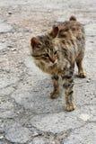 Οι φτωχοί απομακρύνονται γατάκι Στοκ εικόνα με δικαίωμα ελεύθερης χρήσης