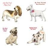 Οι φυλές σκυλιών θέτουν το κυνηγόσκυλο μπασέ, τεριέ ταύρων, τεριέ αλεπούδων, μαλαγμένος πηλός Στοκ φωτογραφία με δικαίωμα ελεύθερης χρήσης