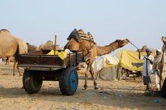 Οι φυλετικοί άνθρωποι προετοιμάζονται στις παραδοσιακές δίκαιες διακοπές βοοειδών, Ινδία Στοκ φωτογραφία με δικαίωμα ελεύθερης χρήσης