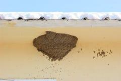 οι φωλιές καταπίνουν Στοκ Εικόνες