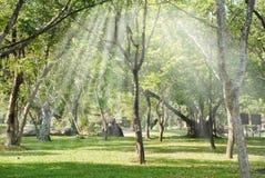Οι φωτεινές ακτίνες ήλιων που λάμπουν μέσω των κλάδων των δέντρων Στοκ Φωτογραφίες