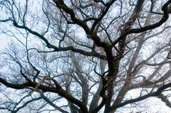 Οι φλέβες των κλάδων δέντρων Στοκ Φωτογραφίες