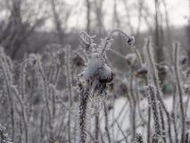 Οι χειμερινές άγρια περιοχές αυξήθηκαν Στοκ Εικόνες