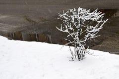 Οι χειμερινές πάλες ενάντια στην άνοιξη στοκ φωτογραφίες με δικαίωμα ελεύθερης χρήσης