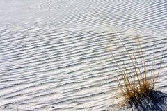 Οι χειμερινές χλόες στο λευκό στρώνουν με άμμο το εθνικό μνημείο στοκ εικόνα