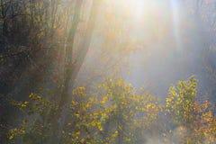Οι χρυσές ακτίνες ήλιων διαπερνούν μέσω των δέντρων στο πρόωρο ομιχλώδες autum στοκ φωτογραφία με δικαίωμα ελεύθερης χρήσης