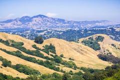 Οι χρυσοί λόφοι στον ενάντιο νομό πλευρών, τοποθετούν Diablo στο υπόβαθρο, κόλπος του Σαν Φρανσίσκο, Καλιφόρνια στοκ εικόνες