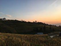 Οι χρυσοί τομείς ρυζιού στοκ φωτογραφίες