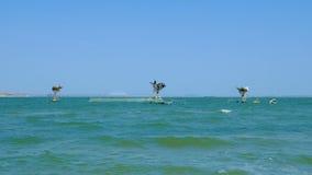 Οι ψαράδες πιάνουν τα ψάρια στη θάλασσα απόθεμα βίντεο