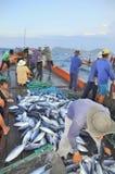 Οι ψαράδες συλλέγουν τον τόνο αλιεί από τα δίχτυα τρατών στη θάλασσα του κόλπου Nha Trang στοκ φωτογραφίες