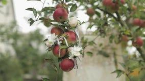 Οι όμορφες γαμήλιες ανθοδέσμες κρεμούν σε ένα δέντρο μηλιάς απόθεμα βίντεο