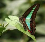 Οι όμορφες πεταλούδες Tun Abdul Razak Heritage Park, Κουάλα Λουμπούρ, Μαλαισία στοκ φωτογραφία