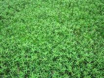 Οι όμορφες πράσινες χλόες στους τομείς στοκ φωτογραφίες με δικαίωμα ελεύθερης χρήσης