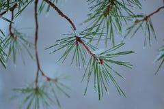 Οι όμορφοι αφηρημένοι κλάδοι δέντρων στοκ εικόνες