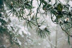 Οι όμορφοι αφηρημένοι κλάδοι δέντρων στοκ εικόνα με δικαίωμα ελεύθερης χρήσης