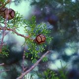 Οι όμορφοι αφηρημένοι κλάδοι δέντρων στοκ εικόνα