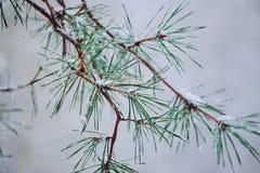 Οι όμορφοι αφηρημένοι κλάδοι δέντρων στοκ φωτογραφίες με δικαίωμα ελεύθερης χρήσης