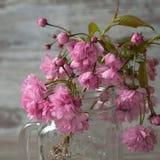 Οι όμορφοι κλάδοι του ρόδινου sakura ανθίσματος σε ένα βάζο γυαλιού με μια λαβή Στοκ φωτογραφία με δικαίωμα ελεύθερης χρήσης