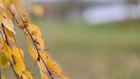 Οι όμορφοι φυσικοί κλάδοι το δέντρο με τα φύλλα φθινοπώρου στοκ φωτογραφία με δικαίωμα ελεύθερης χρήσης