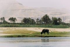 Οι όχθεις του ποταμού του Νείλου στοκ εικόνα με δικαίωμα ελεύθερης χρήσης
