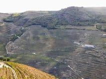 Οι Terraced αμπελώνες διαμορφώνουν τις βουνοπλαγιές της κοιλάδας ποταμών της Πορτογαλίας ` s Douro στοκ φωτογραφίες