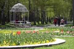 Οι Unrecognizable άνθρωποι περπατούν και χαλαρώνουν στο πάρκο στην άνοιξη Ηλιόλουστη καιρική έννοια Οι άνθρωποι περπατούν σε ένα  Στοκ Εικόνα