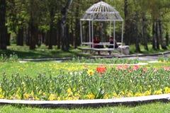 Οι Unrecognizable άνθρωποι περπατούν και χαλαρώνουν στο πάρκο στην άνοιξη Ηλιόλουστη καιρική έννοια Οι άνθρωποι περπατούν σε ένα  Στοκ εικόνα με δικαίωμα ελεύθερης χρήσης